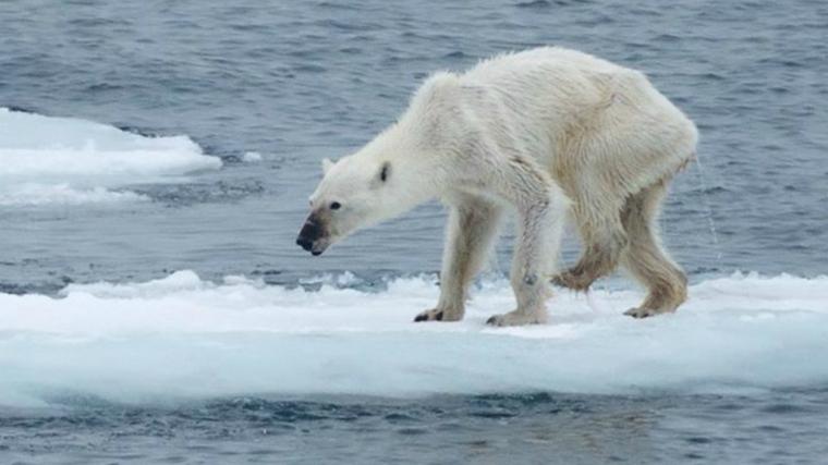 Beruang Kutub dan Hubungannya dengan Konflik Perbedaan Agama