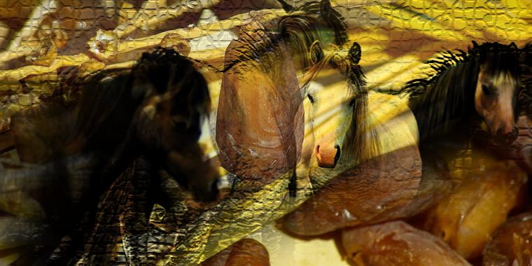 Puisi| Lebaran Kuda
