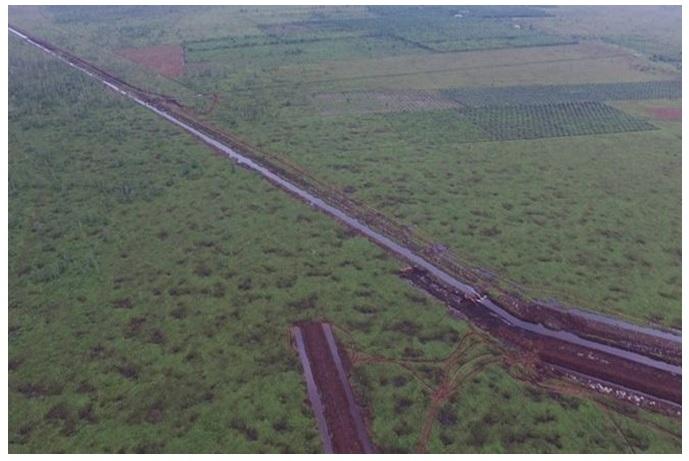 Angin Segar bagi Habitat dan Orangutan dengan Dihentikannya Pembukaan Lahan Gambut di Sungai Putri
