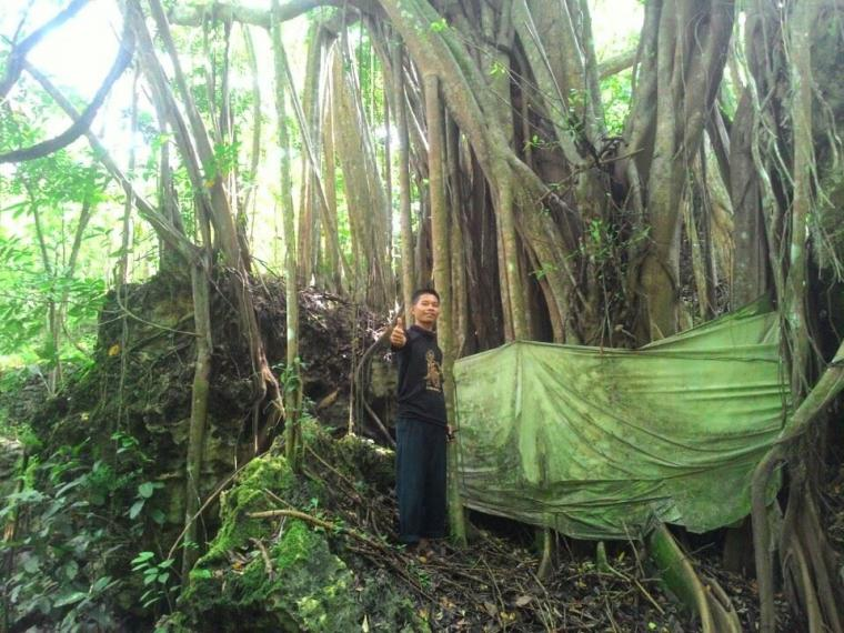 "Tradisi Jawa ""Pacak Suci"" (Pohon Besar)"