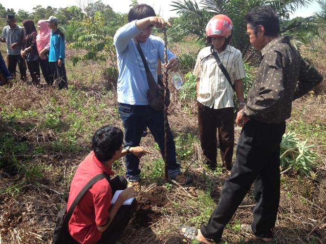 Ternyata, Agroforestri memiliki Peranan Penting dalam Transformasi Lahan di Indonesia