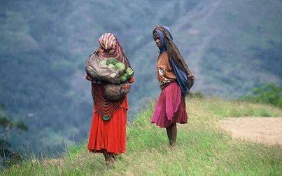 Mamaku di Papua