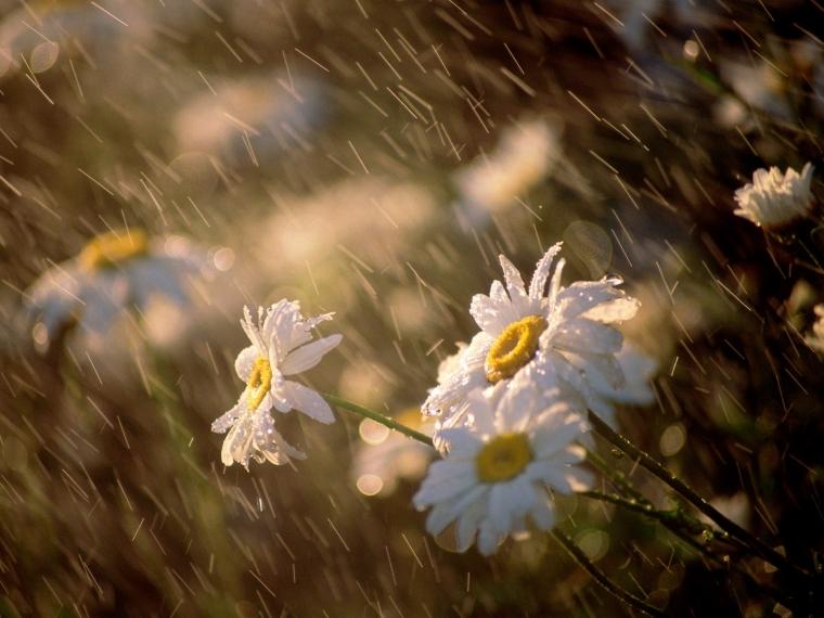 Dongeng | Bersembunyi  Dalam Hujan