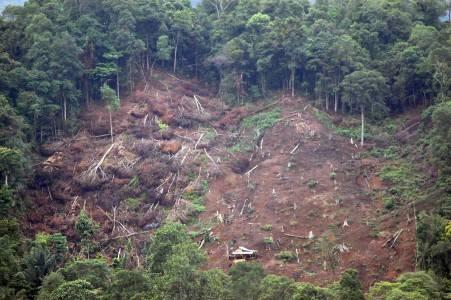Rusaknya Hutan