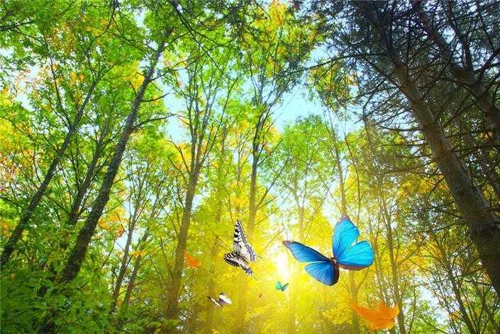 Kepak Sayap Kupu-kupu