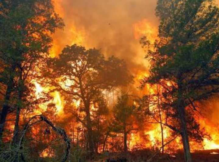 Kebakaran Hutan Jambi: Rendahnya Kesadaran Kritis Masyarakat Berwawasan Ekologi
