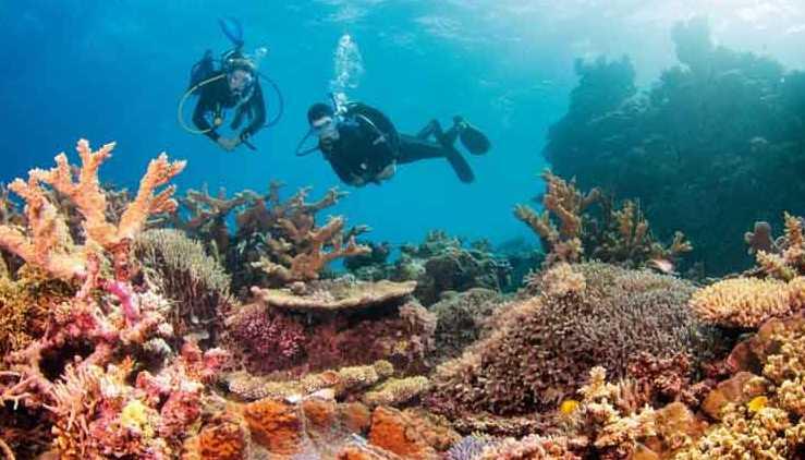 5 Tempat Snorkeling Paling Cantik di Dunia