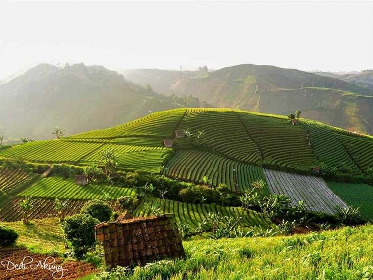 Investasi di Majalengka (Bidang Pertanian)