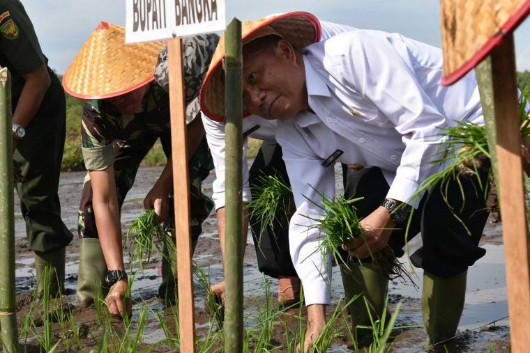Bupati Bangka Pimpin Tanam Padi 46 Hektar di Banyu Asin