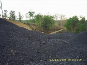 Penghijauan Lahan Bekas Tambang Batu Bara