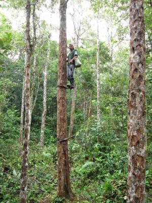 Menafikan Hutan Kemenyan (Tombak Hamijon)