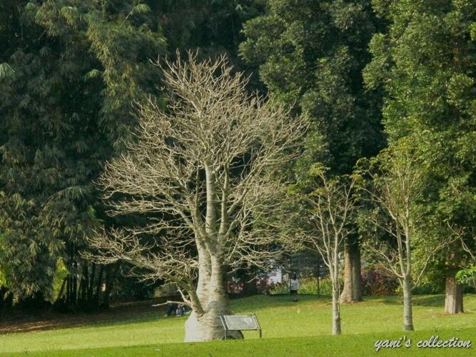 Nyatakan Cinta dengan Pohon