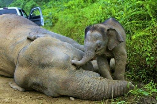 Gajah Melawan, Pesan Alam (hutan) pada Manusia