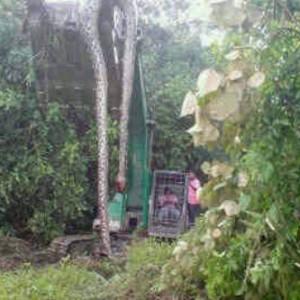 """Percayakah Anda Ada """"Anaconda"""" (Ular Besar) di Pulau Kalimantan?"""