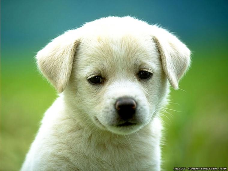 Nama-nama Kompasianer Yang Jadi Nama Anjing