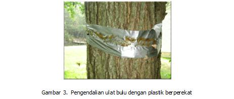 Ulat Bulu, Serangga Hama yang Mudah Dikendalikan
