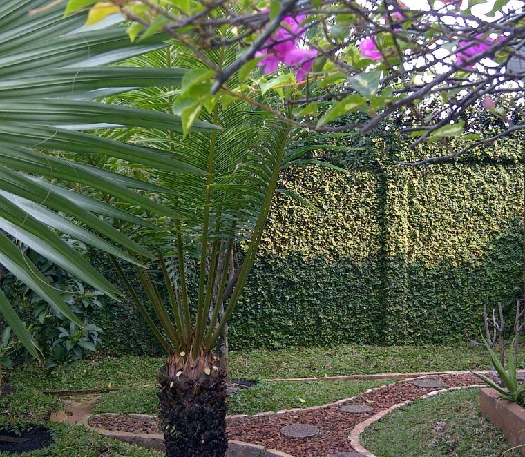 Pohon Rambat Dolar, Alternatif Penghias Dinding