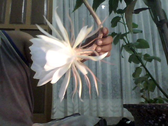 Bunga Langka itu Menakjubkan.