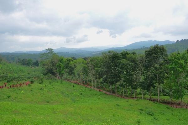 Resto Gumitir: Tempat Istirahat di Titik Tertinggi Gunung Gumitir