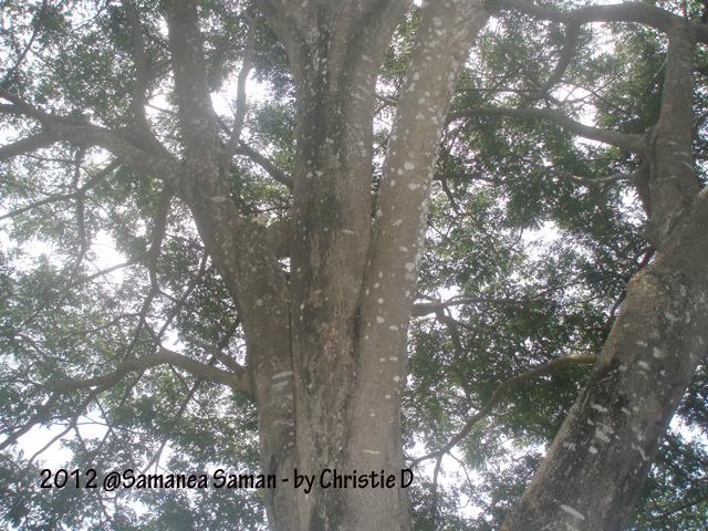 Pak Jokowi, Bagaimana dengan 'Reboisasi' Pohon yang Tumbang dan Penghijauan Jakarta ?