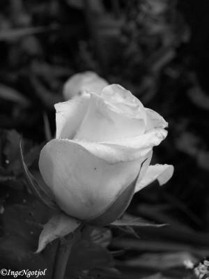 Dari Bunga Digital, Aku Jatuh Cinta