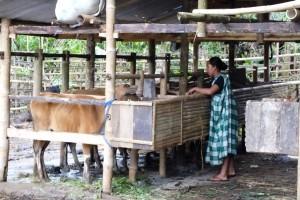 Secercah Harapan Petani Ternak Sapi di Pedalaman Bantaeng