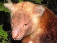 Keunikan Species Baru di Pegunungan Foja Mamberamo Papua