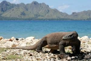 Taman Nasional Komodo Resmi Menjadi The New Seven Wonders of Nature