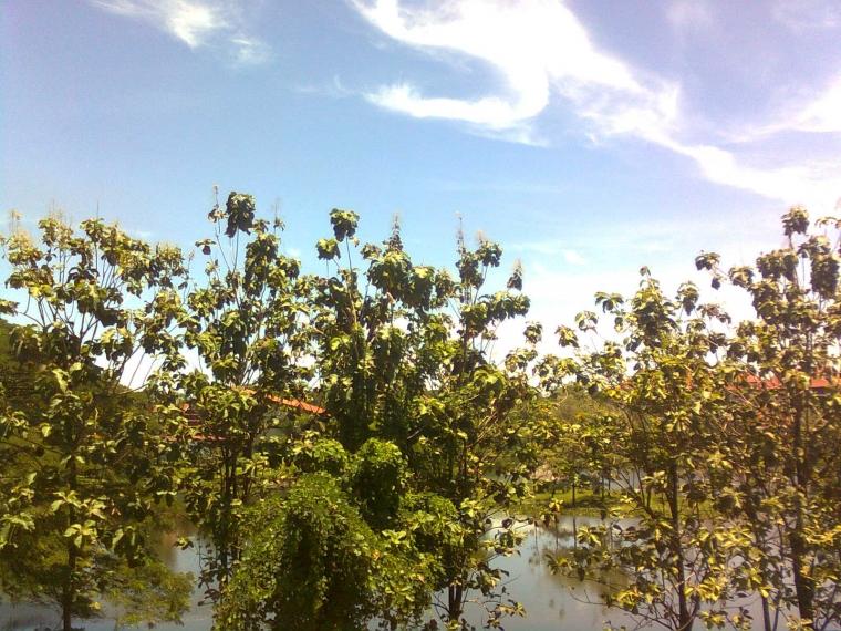 Hutan Universitas Hasanuddin