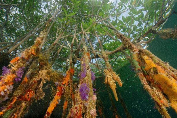 Satu Pengalaman di Mangrove Center Tuban