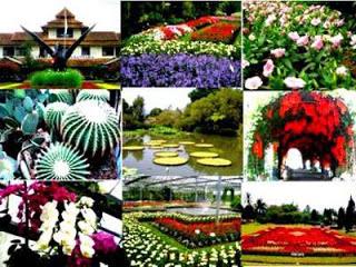 Taman Bunga Nusantara, Cipanas, Puncak, Cianjur