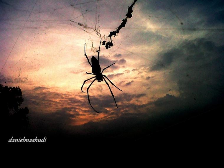 Spider in Twilight