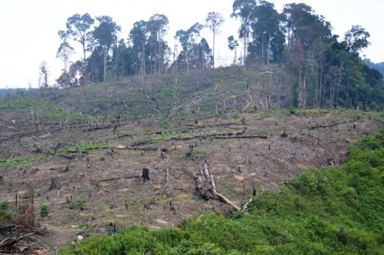 Runtuhnya Hutan Lindung Tormatutung Asahan