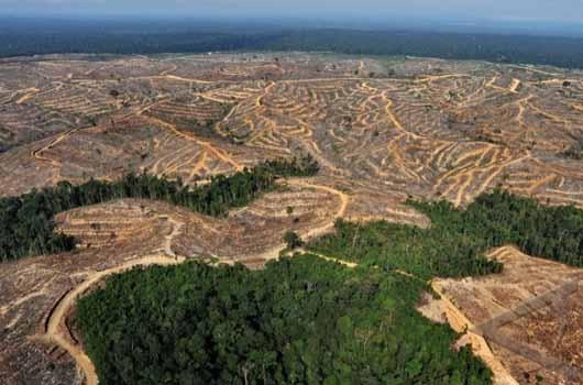 Hutanku Sayang, Hutanku Malang: Akahkah Indonesia menjadi Hutan Beton?