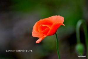 (WPC 13) Perempuan dan Bunga