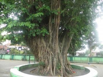 143374915110719745888 - Jenis Jenis Mangrove Dan Gambarnya