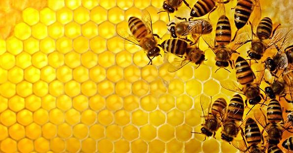 propolis,lebah,sarang lebah