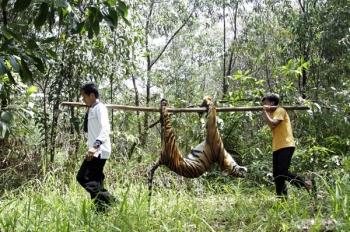 Seteru Atau Sekutu Harimau Dan Manusia Dalam Mitos Sejarah Dan