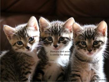 Download 100+  Gambar Kucing Joget Terlihat Keren HD