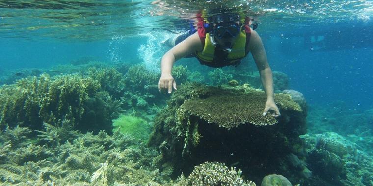 Asyiknya Snorkeling di Kepulauan Seribu