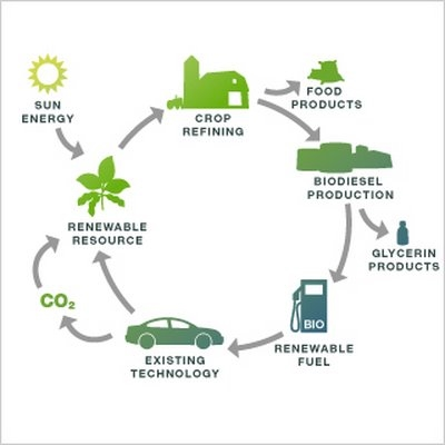"""diesel production from waste vegetable oil The production of biodiesel from waste vegetable oil offers a triple-facet solution: economic, environmental and waste managementthe term """"waste vegetable oil"""" (wvo) refers to vegetable oil which has been used in food production and which is no longer viable for its intended use."""
