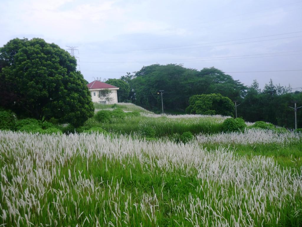 pemandangan rumput ilalang