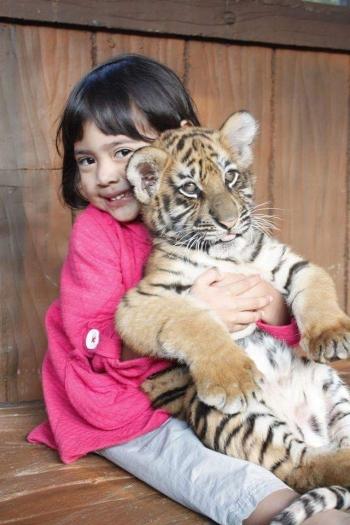 Taman Safari Prigen Serunya Tuh Disini Oleh Tamita Wibisono