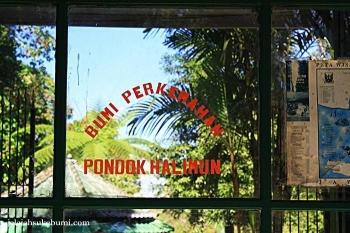 Wisata Bumi Perkemahan Pondok Halimun Sukabumi Halaman All