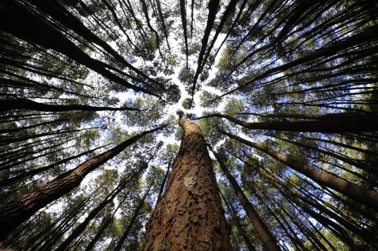 Green Campaign dan Lingkungan Kita