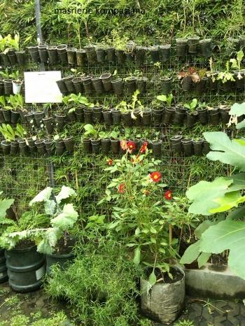 Cuci Mata Dan Belajar Sehat Di Kebun Sayuran Organik Bandung