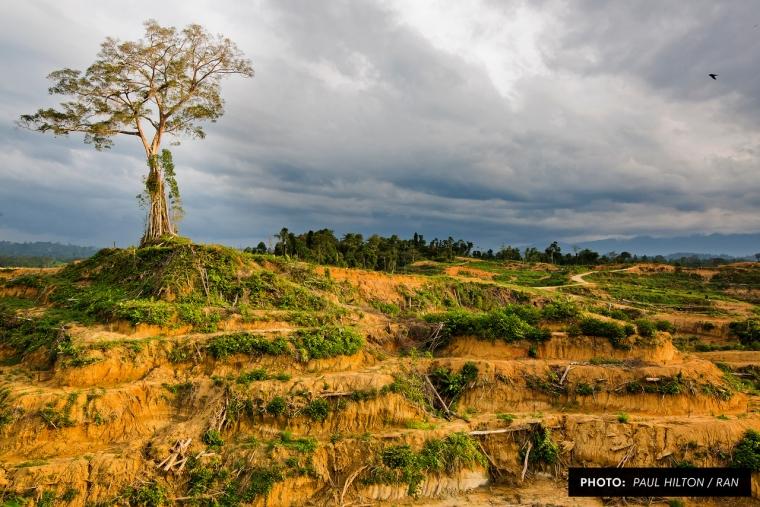 Kelirumologi RTRW Aceh dan Dampaknya pada Ekosistem Leuser