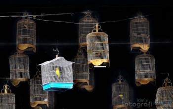 Cerpen] Hilangnya Burung-burung Tito oleh Takas T P