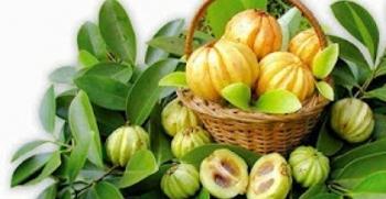 garcinia cambogia adalah asam gelugur