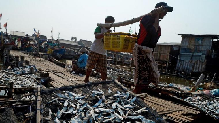 """Menelisik Potensi Ekonomi Ikan """"Resek"""" di Kelurahan Kalanganyar Sidoarjo"""